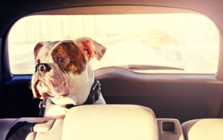 Safe Driving with Pets